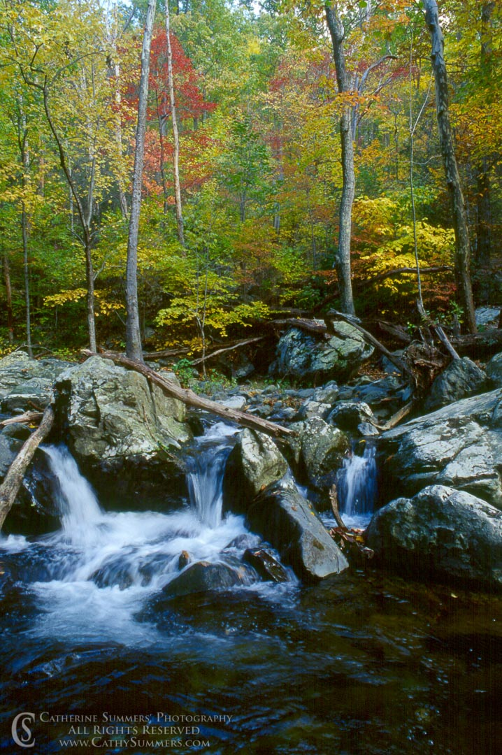 Fall Colors on the Rose River: Shenandoah National Park, Virginia