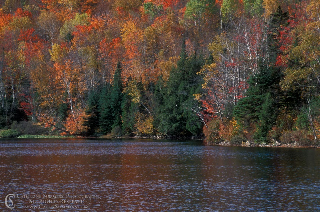 Autumn Colors by a Lake #2