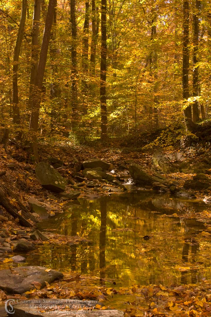 Autumn Afternoon Along a Stream
