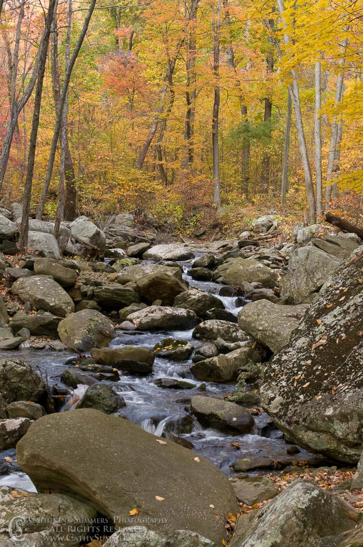 White Oak Canyon, Autumn Afternoon #1