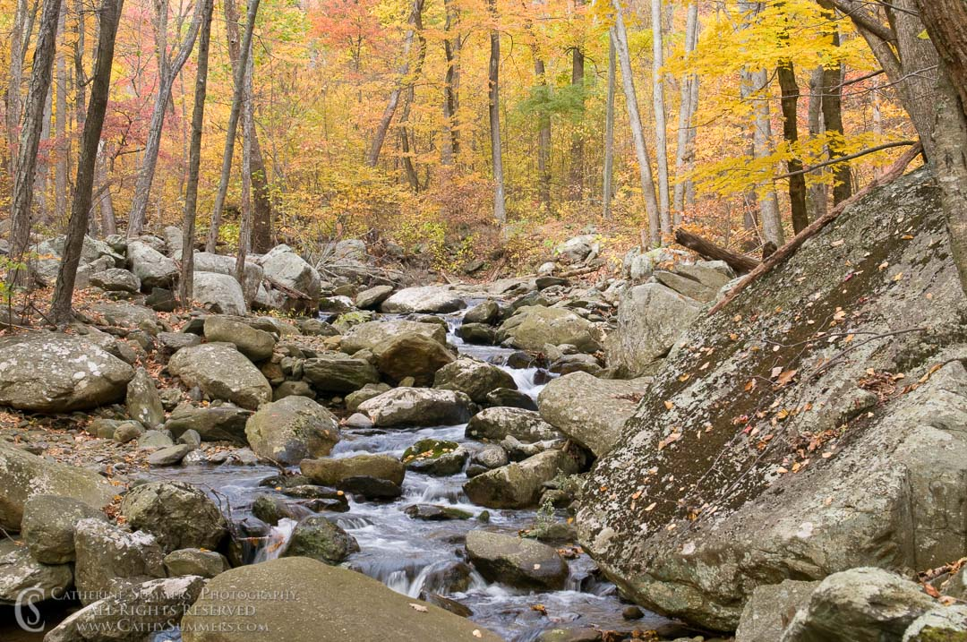 White Oak Canyon, Autumn Afternoon #2