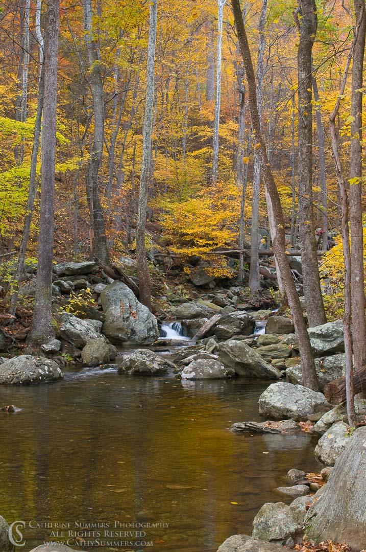 White Oak Canyon, Autumn Afternoon #3