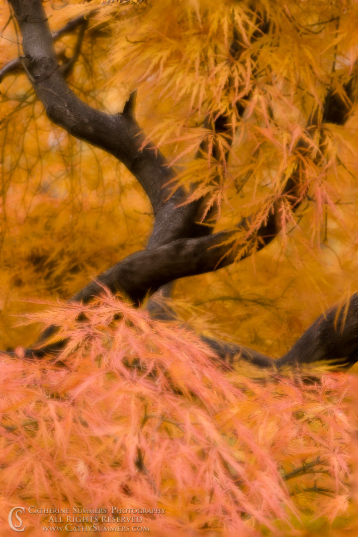 Japanese Maple Abstract #1