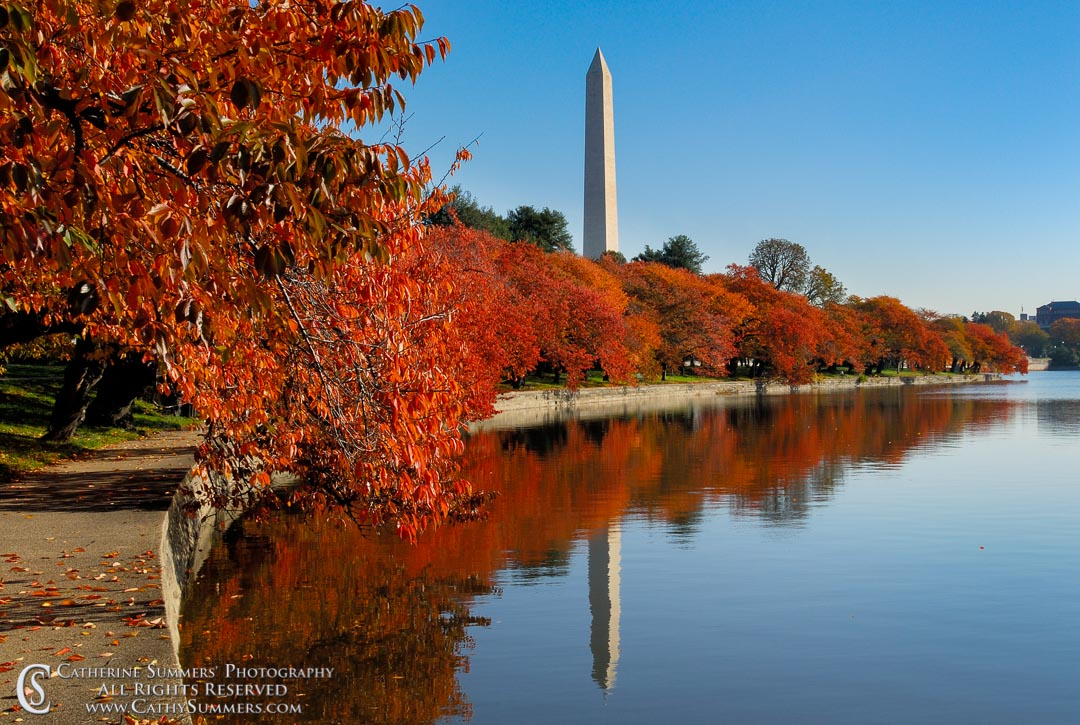 Title: Tidal Basin, Autumn Morning Reflections #2; Keywords: autumn, cherry trees, DC, horizontal, reflection, Tidal Basin, Washington, Washington Monument