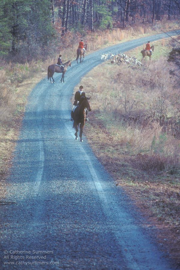 FH_1981_003: Fox Hunting, hounds, Foxfield, road, Red Acres, Staff