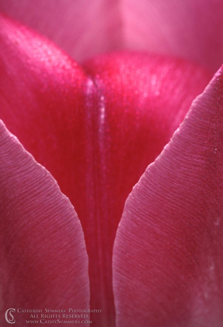 Tulip Macro #2