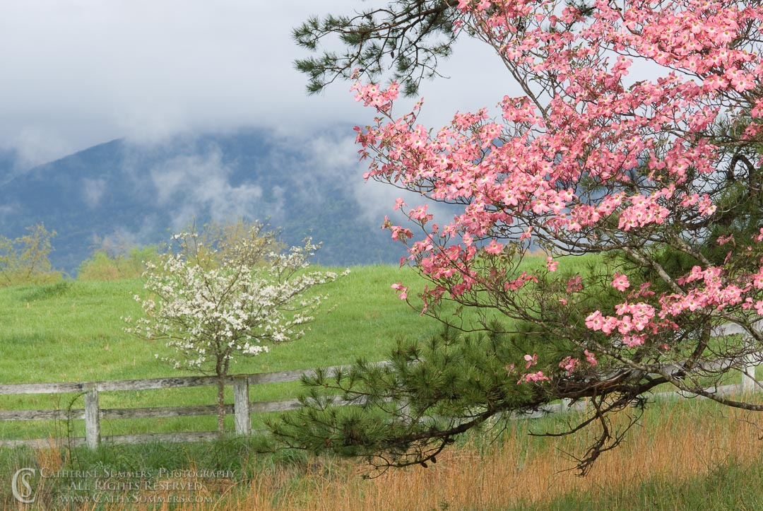 Dogwoods & Clouds on a Spring Morning