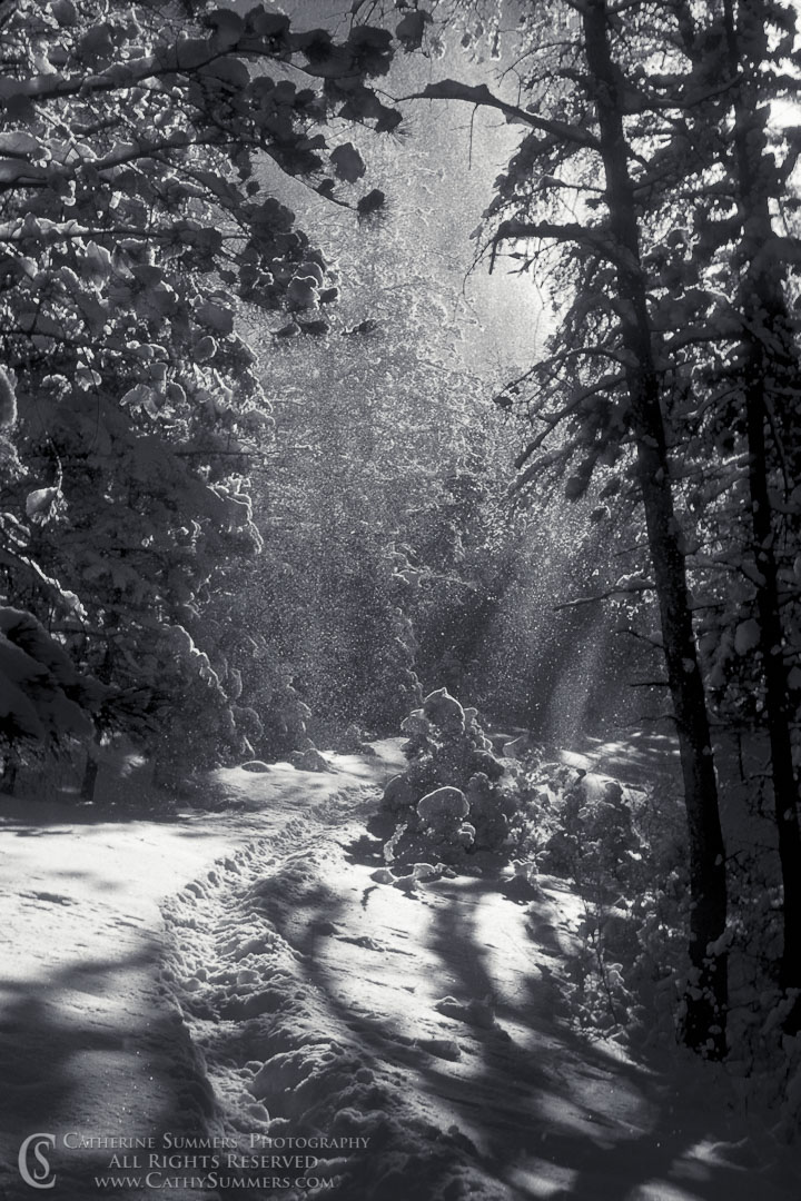 WS_1979_01_BW: vertical, Winter, snow, Colorado, trail