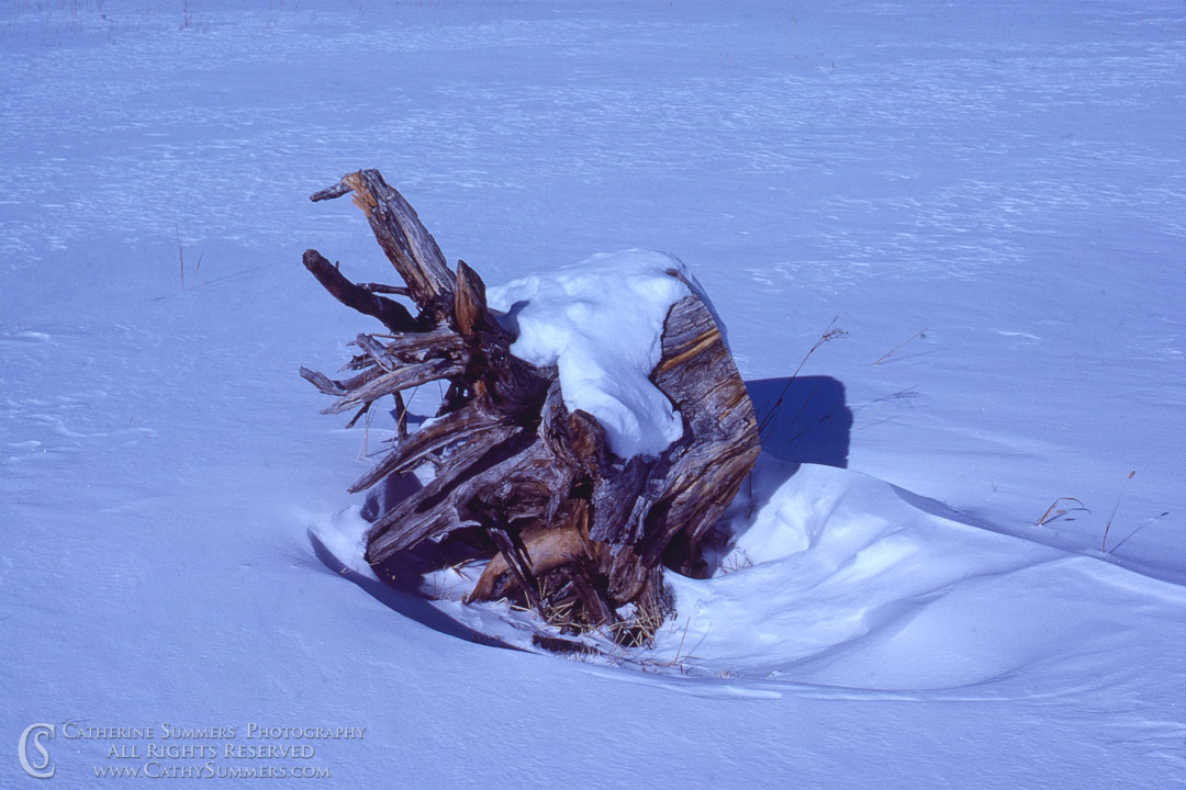 Stump and Drifted Snow: Colorado