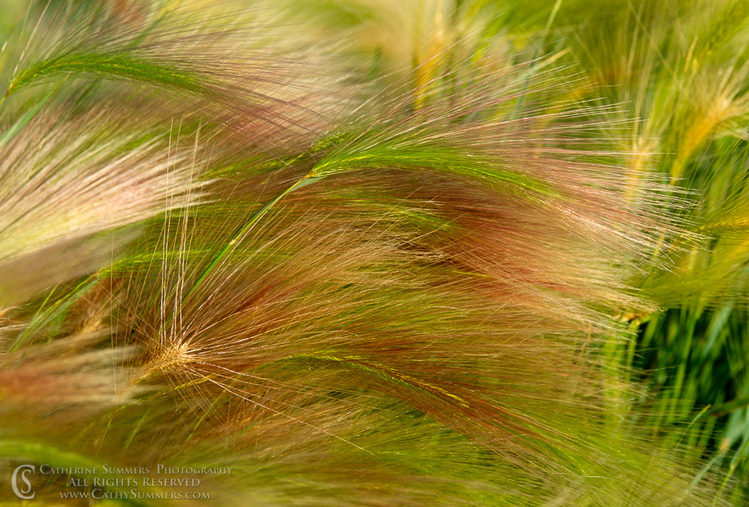 YNP_0101: wilderness, horizontal, grass